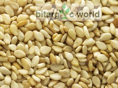Sesame seed for sale