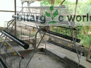 Poultry Equipment For Layers