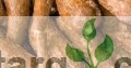 Sourcing And Supply Of Cassava/Agricultural Produce And Consultancy