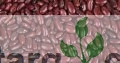 Wholesale Red Beans Organic PAINT RUBBER