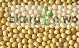 Soya Beans Seeds Organic Seeds For Planting