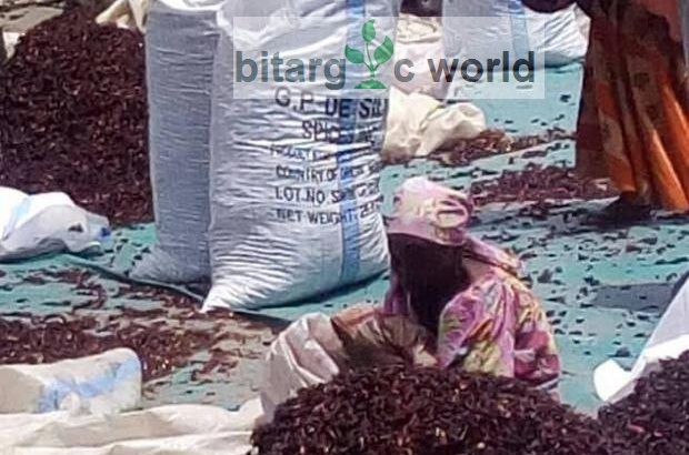 Hibiscus Flower Zobo Leaf For Sale