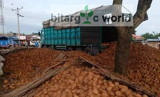 Coconut In Very Large Quantities And Retails