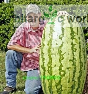 Giant Water Melon Seeds