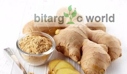 Ginger (Fresh And Dried) Export