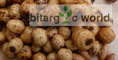 Export Of Food Items And Agricultural Products