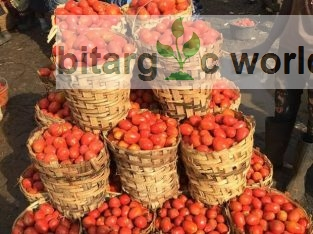Fresh Tomatoes Ready For Delivery