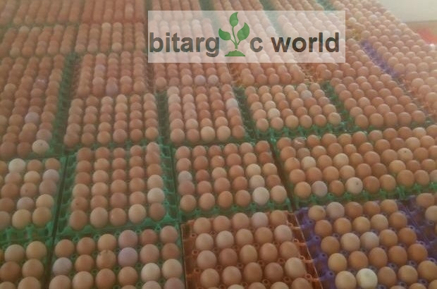 Egg Crate For Sale
