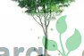 GreenLife Cooperative Limited