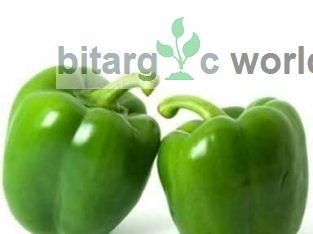 Green Pepper Vegetables Organic Agric Produce
