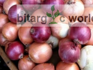 Onions Bag Of Onions Agric Produce