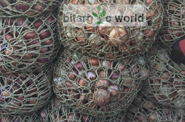 Fresh Onions Ready For Delivery