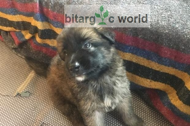 Gsd Available