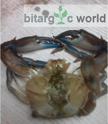 Clean Crabs For Sales.