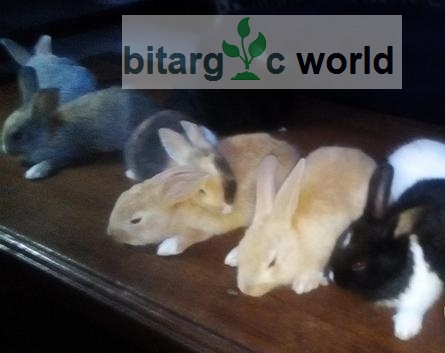Rabbits Available For Sales