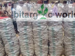 Bags Of Onion Available For Sale