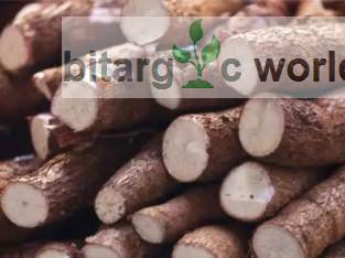 Tonnes of cassava tubers for sales